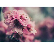 Cherry Blossom Pink Photographic Print