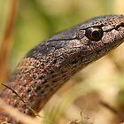 Marsh Snake by Steve Bullock