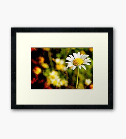 Textured Daisy field Framed Print