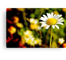 Textured Daisy field Canvas Print