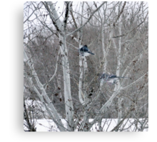 Aspens and Blue Jays Metal Print
