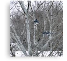 Aspens and Blue Jays Canvas Print