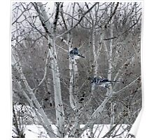 Aspens and Blue Jays Poster