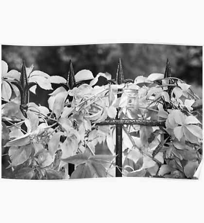 Leaves and Railings Poster