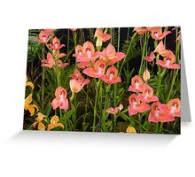 Peach Glasgow Orchids Greeting Card
