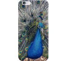 Peacock II iPhone Case/Skin