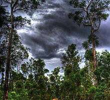 Jarrahwood forest track by BigAndRed