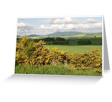 The Bloomin Yellow Month Of May Greeting Card