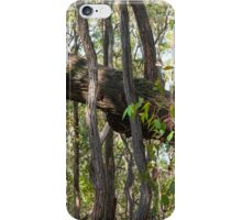 Tree Trunks Askew iPhone Case/Skin