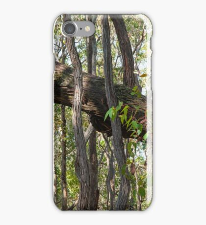 Tree Trunks Askew iPhone Case/Skin