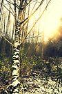 On a winter walk by Joshua Greiner
