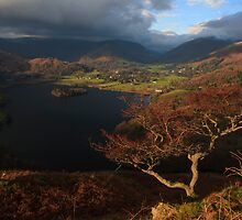 Gnarly tree overlooking Grasmere by Shaun Whiteman