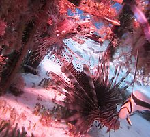 Lionfish in a Lobster Pot by Christopher Smart