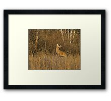 That is some itch !? Framed Print