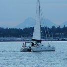 Blue Sailing Cat by rferrisx