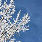 Saskatchewan Hoar Frost II by TingyWende