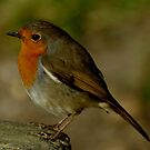Robin by Russell Couch