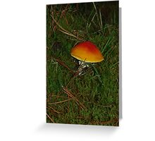 Little Orange Toadstool Greeting Card