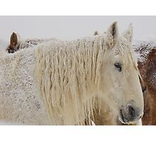 Knight of Dreams First Snow Photographic Print