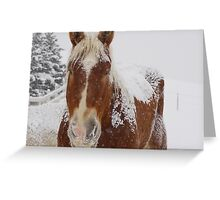 Pumpkin n Snow Greeting Card