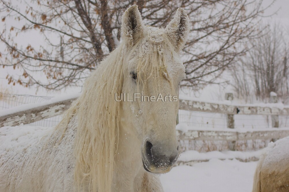 Snow Flakes on Knight by UILFineArts