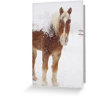 Snow covered Pumpkin Greeting Card