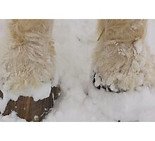 Feathers in the Snow Photographic Print