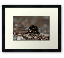 Beetle Face Framed Print