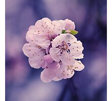 - Blossom III - Photographic Print