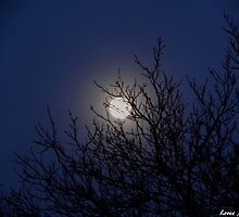 Cold and Frosty Moon by © Loree McComb