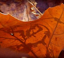 Leaf Shadow by vigor