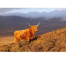 Highland Cattle Landscape Photographic Print