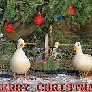 Christmas Card Ducks by relayer51