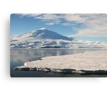 Lonely Penguin, Antarctica Canvas Print