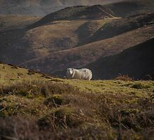 In a rugged landscape by Chris Fletcher