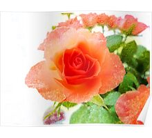 Rose on Texture Poster