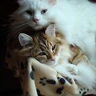 Feline complicity by Marie-Eve Boisclair