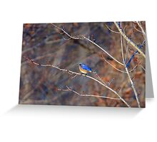 Eastern Blue Bird - Airline Trail, Colchester CT Greeting Card