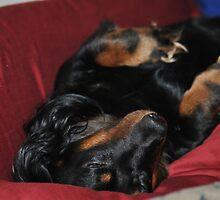 UPSIDE DOWN WEENIE DOG  by talindsey