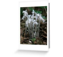 Indian Pipe, Airline Trail, East Hmpton Greeting Card