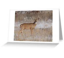 5X4 whitetail #099 Greeting Card