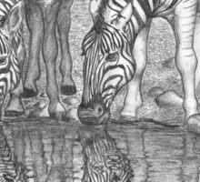 Thirsty Zebras Sticker