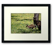 Kangaroos in the shade Framed Print