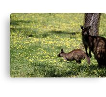 Kangaroos in the shade Canvas Print