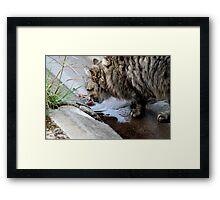 Drinking in suburbia Framed Print