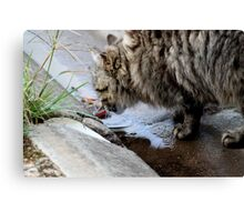 Drinking in suburbia Canvas Print