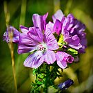 Pink Wild Flower by Colin Metcalf