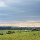 Sheep at Wistow - South Australia by ChrisJeffrey