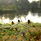 SUN FLOWERS BY THE LAKE by thekkeffect
