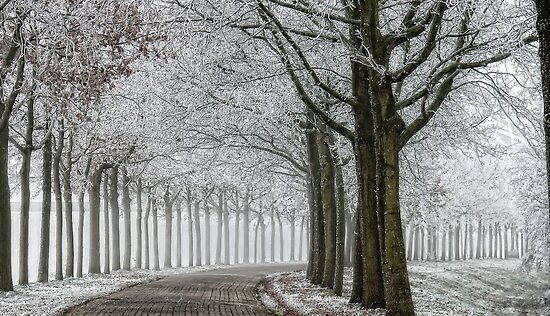 winter by LarsvandeGoor